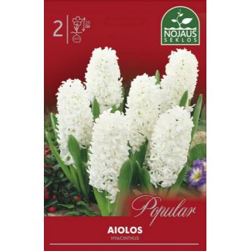 Hyacinthus AIOLOS