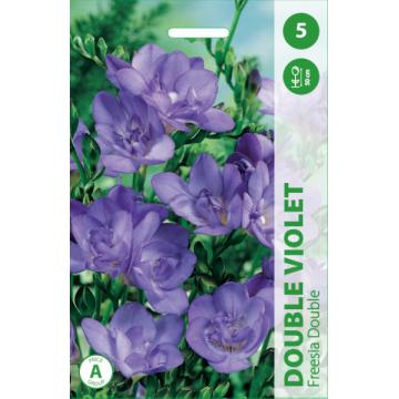 Freesia Double violet