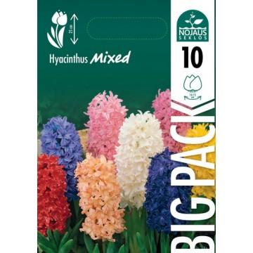 Hyacinthus BIG PACK MIX