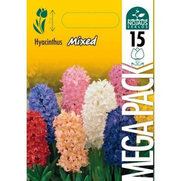 Hyacinthus MEGA PACK MIX