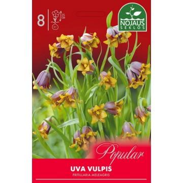 Fritillaria UVA VULPIS