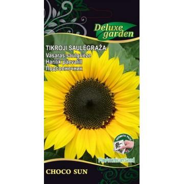 Päevalill Choco Sun