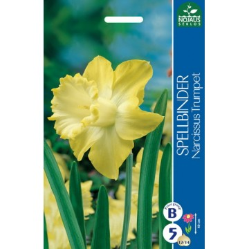 Narcissus SPELLBINDER