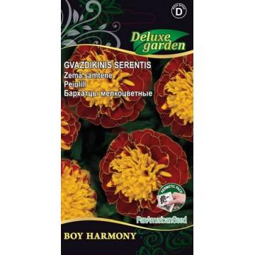 Peiulill Boy Harmony