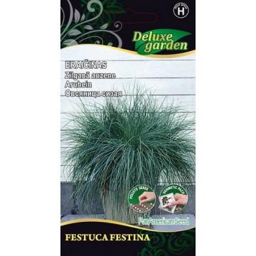 Aruhein Festuca Festina