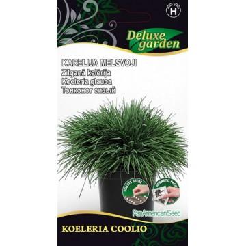 Koeleria Coolio