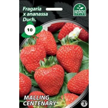 Frigo maasikataimed MALLING...