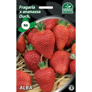Frigo maasikataimed ALBA A...