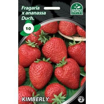 Frigo maasikataimed...