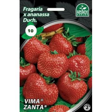 Frigo maasikataimed VIMA...