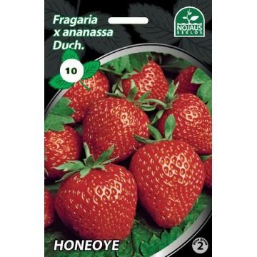 Frigo maasikataimed HONEOYE...