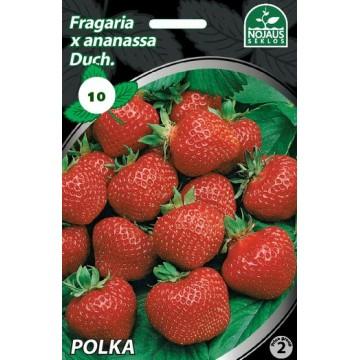 Frigo maasikataimed POLKA A...