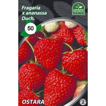 Frigo maasikataimed OSTARA...