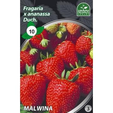 Frigo maasikataimed MALWINA...