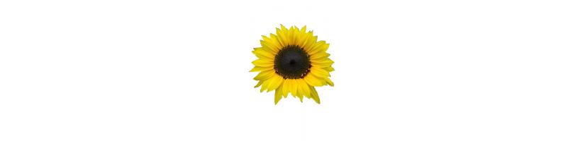 Muud üheaastased lilled